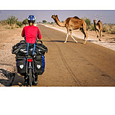 Cycling, India, Dromedary camel