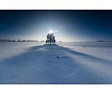 Tree, Winter, Shadow, Winter sun