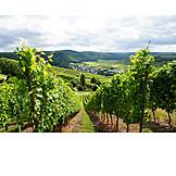 Vineyard, Viticulture