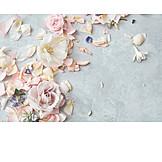Petals, Pastel tones, Soft