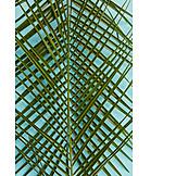 Pattern, Palm leaf