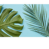 Palm leaf, Leaf, Monstera