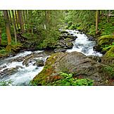 Wildlife reserve, Styria, Riesbach valley