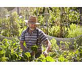 Man, Harvesting, Vegetable garden