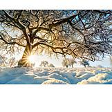Tree, Winter, Sunbeams