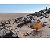 Desert, Stony desert