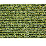 Sunflower field, Series