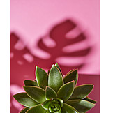Houseplant, Potted plant, Orpine family