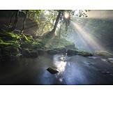 Backlighting, Stream, Forest