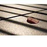 Light and shadow, Autumn leaf, Grate