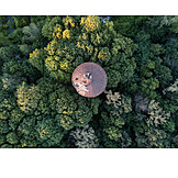 People, Forest, Roof, Treetop