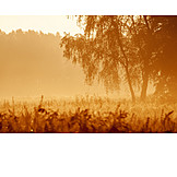 Nature, Dawn twilight, Haze