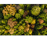 Forest, Trees, Treetop, Mixed forest