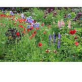 Wild flower, Cottage garden