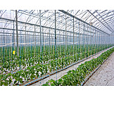 Agriculture, Gardening, Greenhouse, Foil tunnel