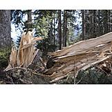 Tree trunk, Storm damage, Tree damage
