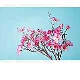 Cherry blossom, Tree blossom, Fruit flower