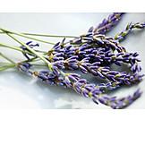 Lavender, Aromatic plant, Lavender blossom