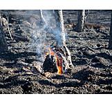 Fire, Ash, Forest fire