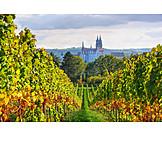 Vineyard, Meißen, Castle hill