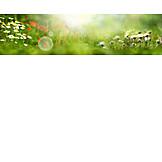 Sunbeams, Blips, Spring meadow