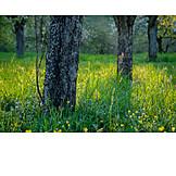 Meadow, Tree trunk, Fruit tree