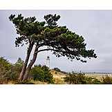 Lighthouse, Windswept trees, Hiddensee